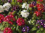Не спешите уничтожать: 9 очень полезных насекомых в саду