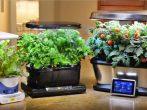 Когда и как заготавливать мох для конопатки, чтобы он был качественным