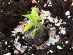 Пригодится: 7 причин, почему дачникам не стоит выбрасывать яичную скорлупу