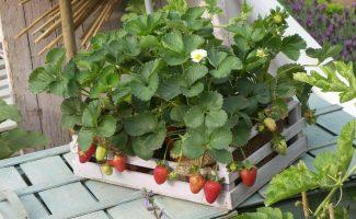 11 фруктов и овощей, которые вы можете вырастить на подоконнике дома