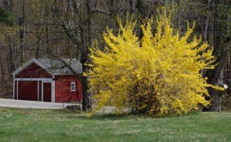 4 нежных растения, которые плохо переносят зимовку и нуждаются в хорошем укрытии