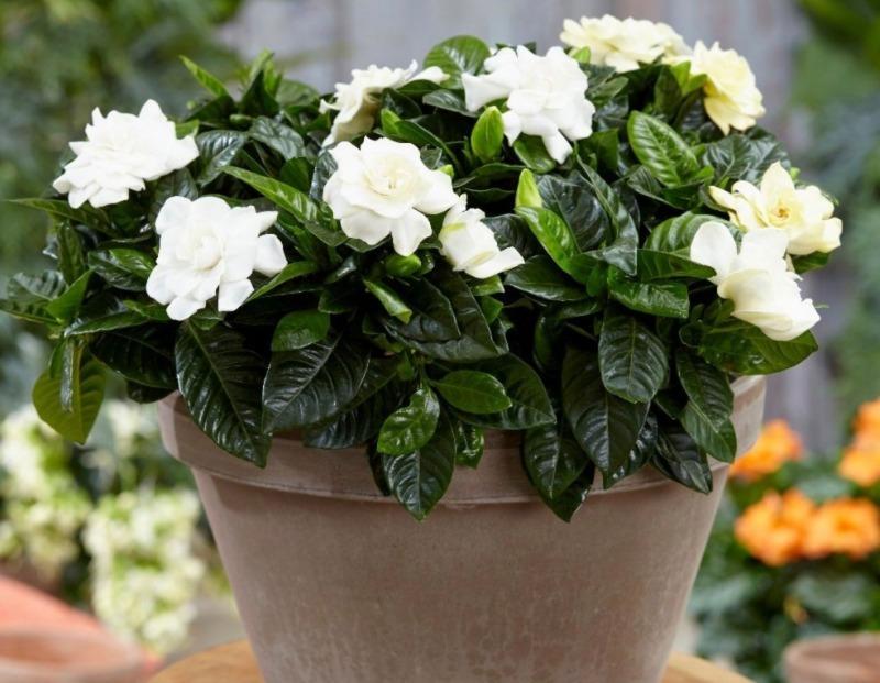 5 растений и цветов, которые помогут вам высыпаться
