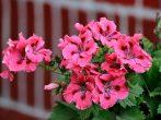 6 прекрасных растений для вашей спальни, которые одобрил фэн-шуй