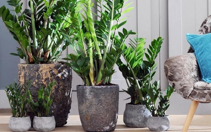 8 домашних растений, которые можно не поливать целый месяц