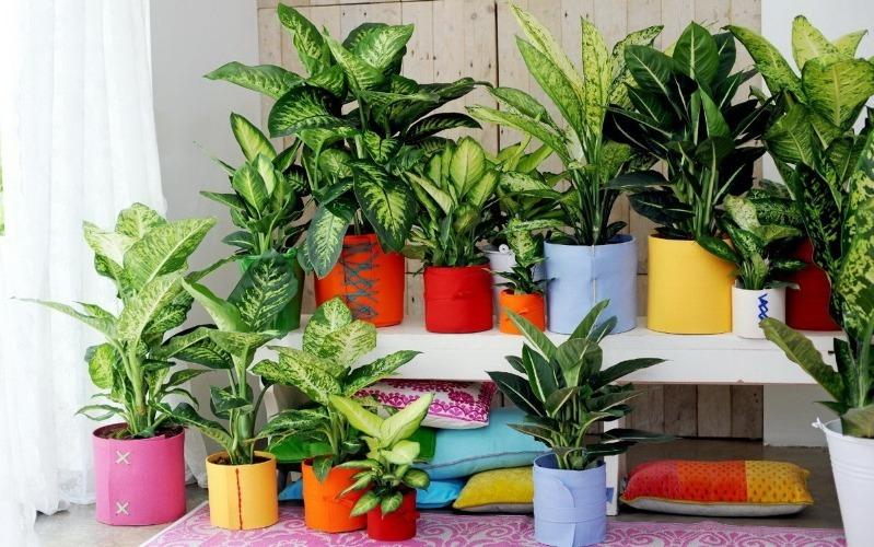 9 комнатных растений, которые могут расти в любом месте вашего дома, даже без солнца