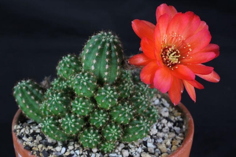 10 ядовитых растений, которые скорее всего стоят в вашем доме