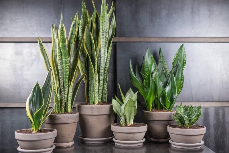 Поставьте на рабочий стол: 8 растений, которые помогут вам забыть о стрессе