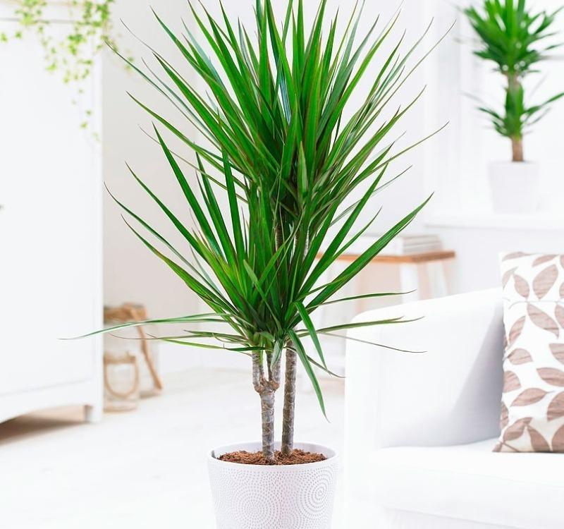 Какие комнатные растения подходят каждому знаку Зодиака