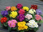 11 цветов, которые нужно сеять на рассаду в декабре и январе
