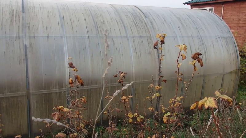 Обработка теплицы осенью: гид огороднику