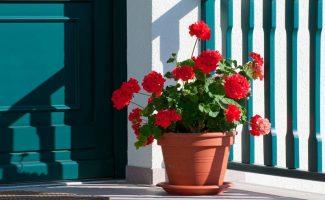 11 комнатных растений, которые привлекают счастье и удачу в дом
