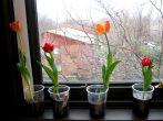 11 цветов, которые легко вырастить даже в стакане воды