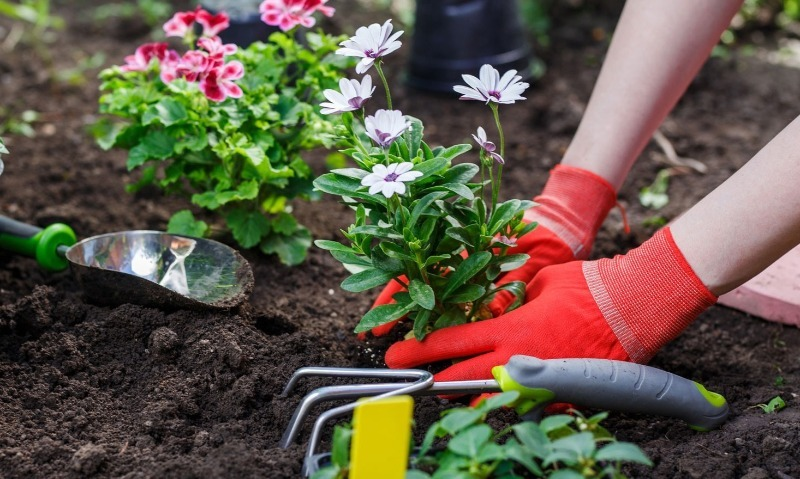 11 неприхотливых цветов, которые прекрасно подойдут начинающим садоводам