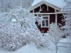 8 дел, которыми каждый садовод должен заняться зимой