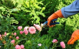 5 жизненных уроков, которые может преподать нам наш собственный сад