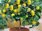 Цветы для семейного счастья: 8 лучших комнатных растений для дома по фэн-шуй