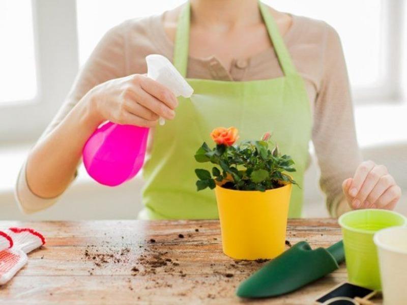 7 советов любителям комнатных растений, которые упростят жизнь вашим цветам