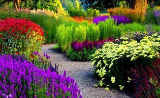 7 самых морозостойких цветущих кустарников, которые сделают сад красивым и стильным