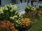 7 правил при выращивании многолетников, о которых стоит знать всем садоводам