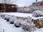 4 причины гибели садовых растений зимой
