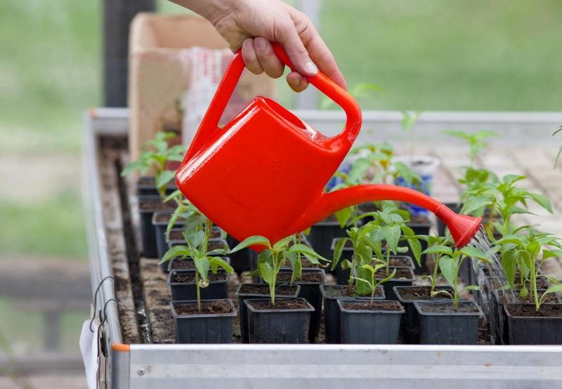 5 простых средств для большого урожая, которыми вы можете подкормить свою рассаду