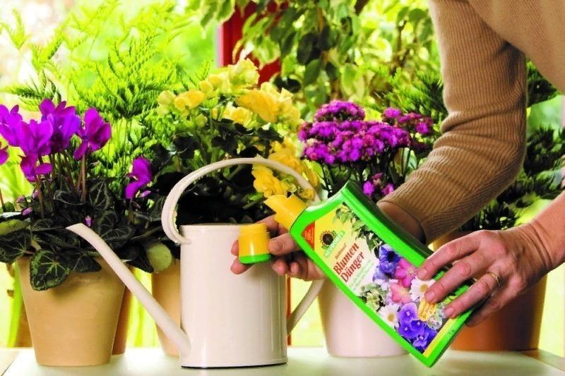 6 действенных способов спасти погибающее растение