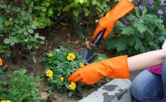 5 опасных вещей, которые не стоит покупать в магазинах для сада