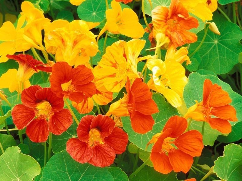 7 цветов, которые невероятно быстро всходят и зацветают