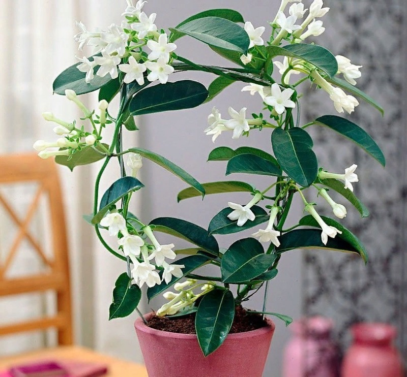 5 комнатных растений, которые порадуют вас самым приятным и стойким ароматом