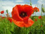 8 самых неприхотливых садовых цветов, которые достаточно просто посадить или посеять
