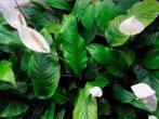 7 растений для дома, которые выживут даже в темном углу