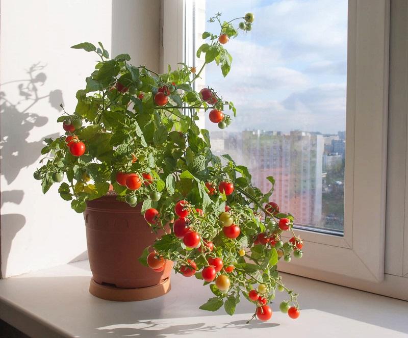 5 нужных хозяйке овощей, которые можно вырастить прямо в квартире