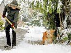 Что обязательно необходимо сделать садоводу в феврале