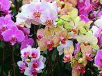 5 натуральных подкормок для орхидей, которые способствуют регулярному цветению