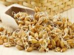 Как проращивать зерна на подоконнике без значительных усилий