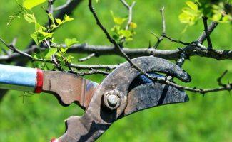 Как проводить обрезку плодовых деревьев, чтобы получить хороший урожай