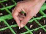 Несколько важных правил, соблюдая которые вы выберете самые подходящие семена растений