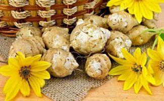 Как заготавливать впрок топинамбур или земляную грушу
