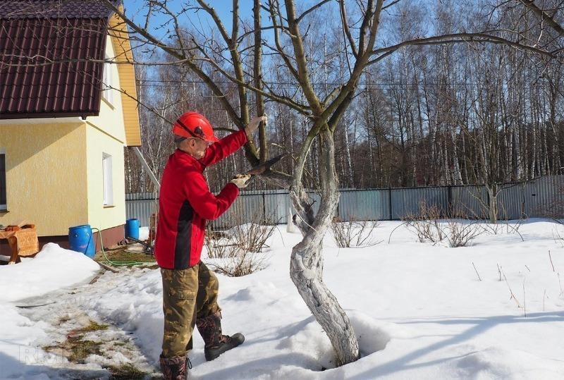 Февраль: работы, которые важно провести садоводу