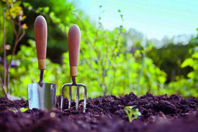 Что не нужно делать в саду ранней весной: 7 самых бессмысленных работ