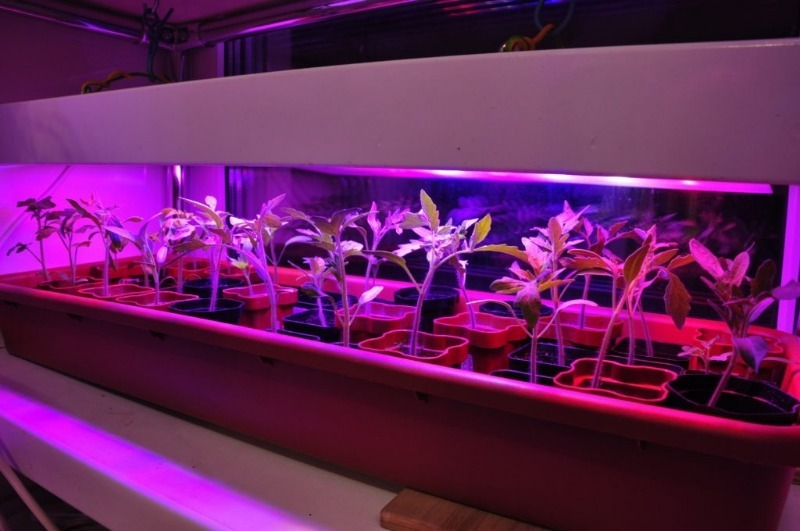 Хорошая подсветка — достойный урожай: 7 советов, как не ошибиться в выборе фитолампы для рассады