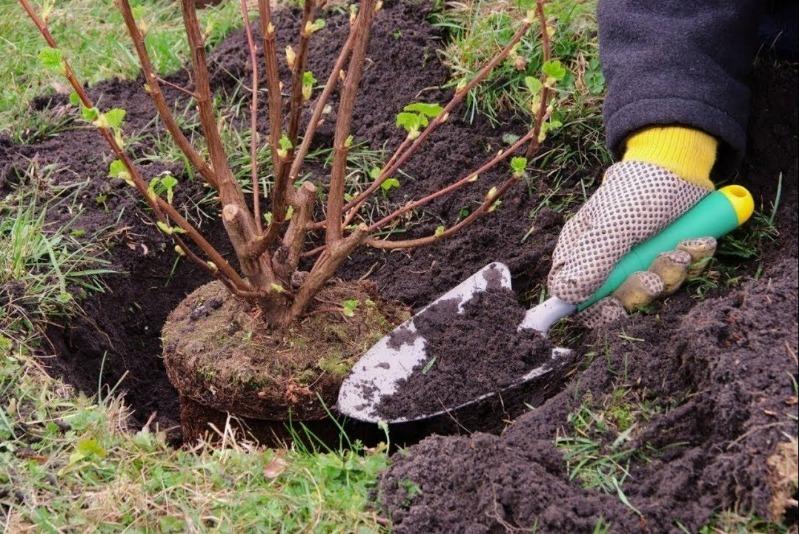 8 ошибок в плодовом саду, которые лишают богатого урожая