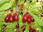 6 самых неприхотливых в уходе плодово-ягодных культур, которые примутся на любой даче