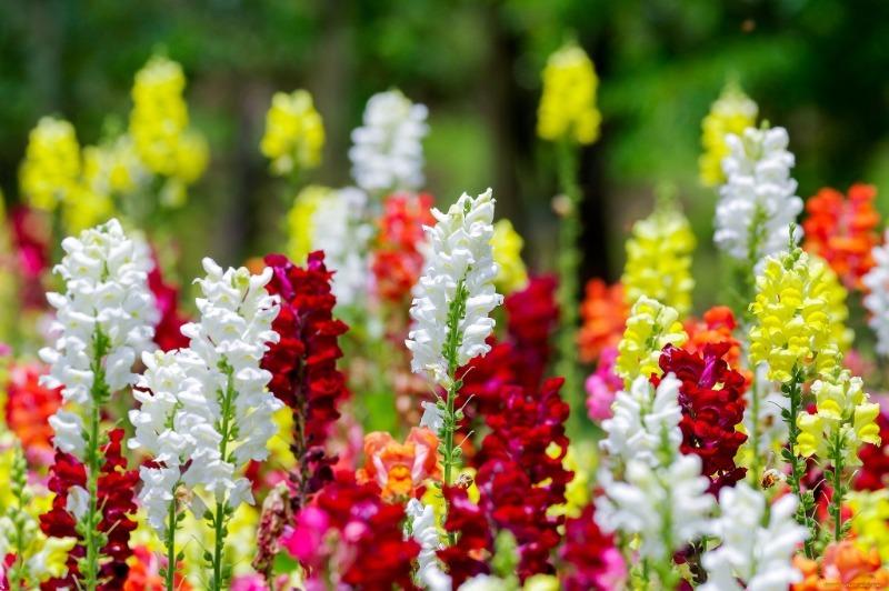 Февральский посев: 7 однолетних цветов, которые стоит посадить