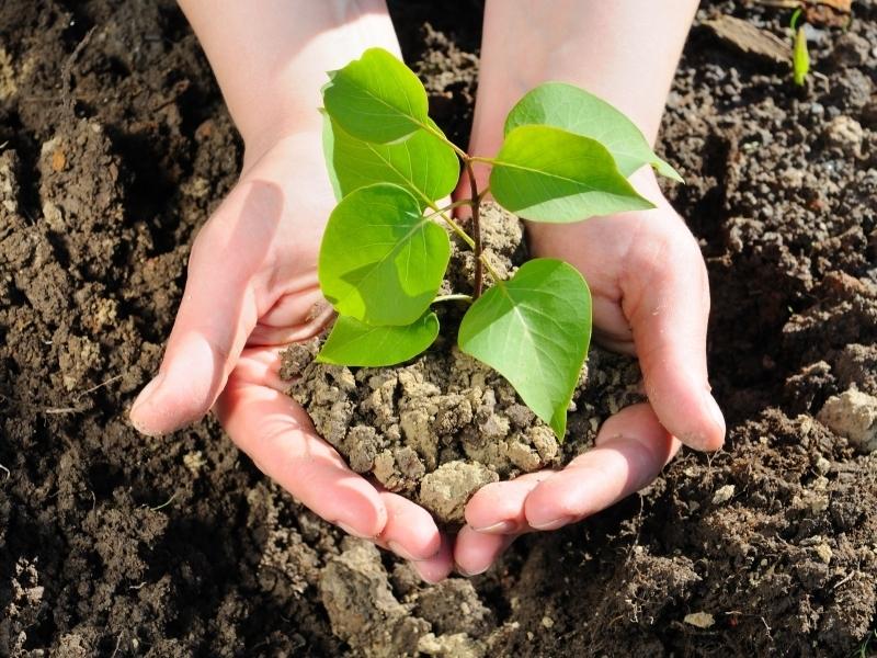 5 признаков того, что растение быстро приживется и будет хорошо плодоносить