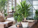 5 растений, которые лучше других очищают воздух в доме