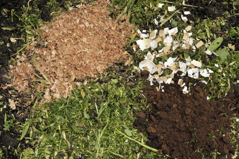 Какие растения нельзя удобрять яичной скорлупой, чтобы не потерять урожай