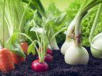 7 пар растений, которые не будут плодоносить рядом друг с другом
