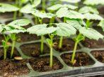 Огородные приметы: на что обратить внимание в апреле