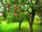 Зачем наши бабушки закапывали под яблоней старую подкову
